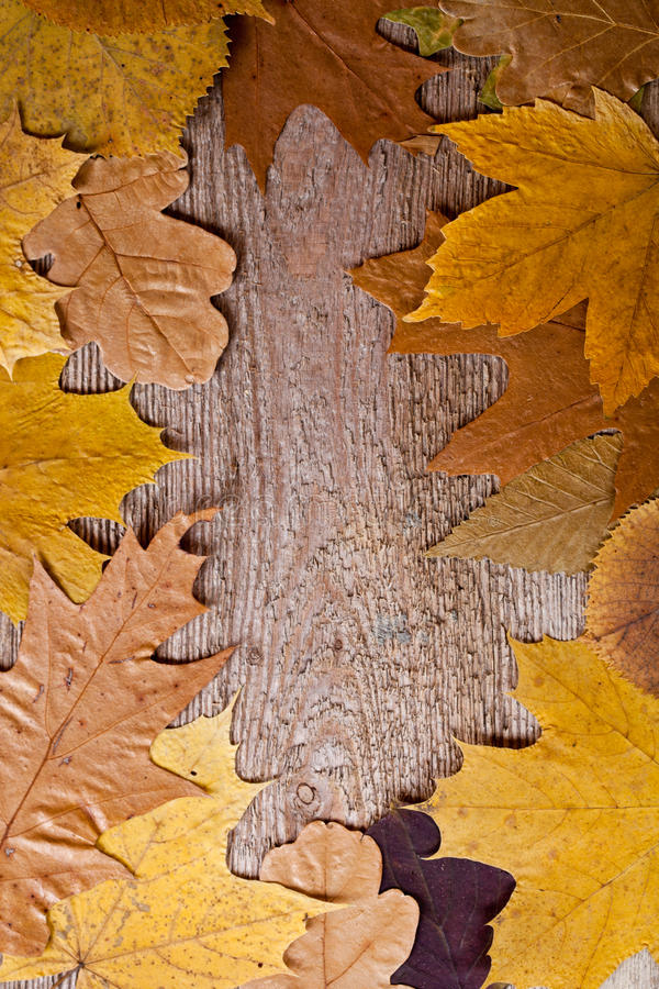 Download Autumn leaves frame stock photo. Image of season, closeup - 26944598