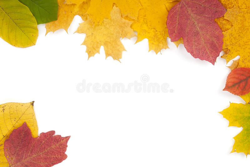 Download Autumn leaves frame stock photo. Image of leaf, gold - 27018548