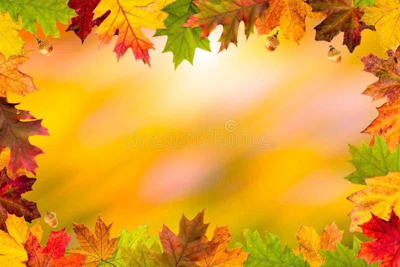 Autumn Leaves Frame foto de archivo libre de regalías
