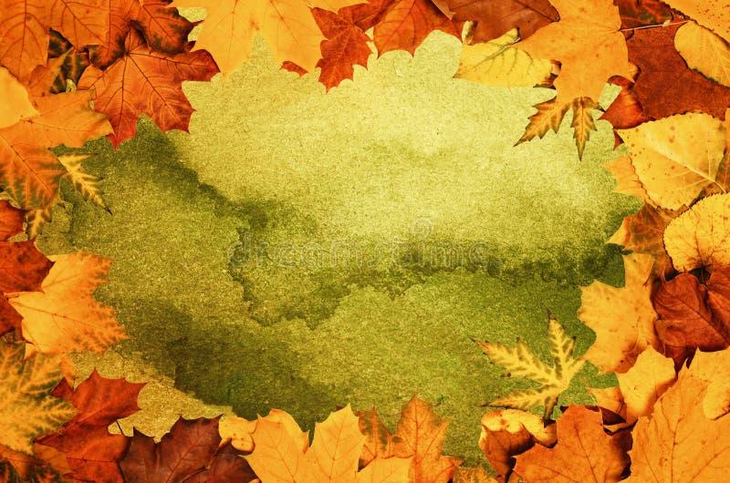 Autumn Leaves Frame stock afbeelding