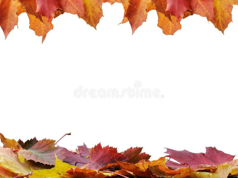 Autumn Leaves Frame stock foto