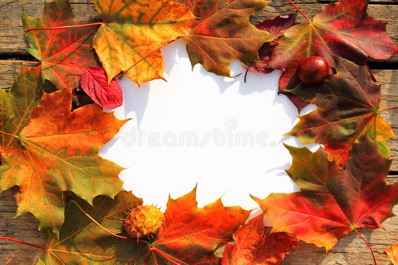 Autumn leaves frame. White card in a natural frame of autumn leaves and chestnut on wooden table stock photos