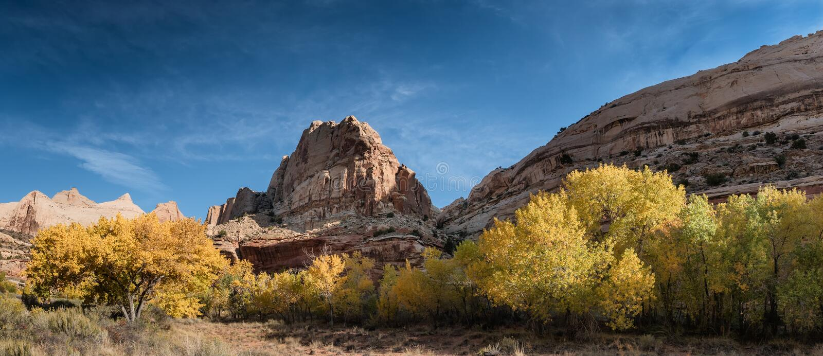 Autumn leaves Fruita in Capitol Reef National Park, Utah. US stock photography