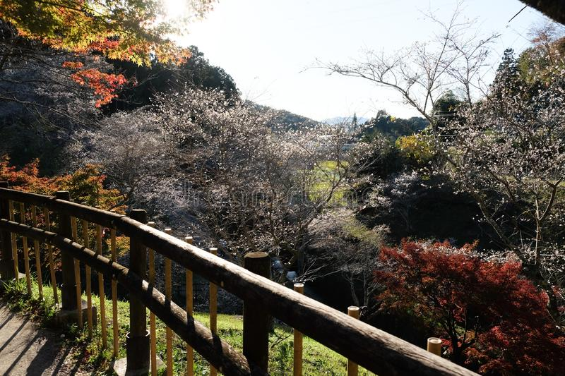 Autumn leaves garden with red maple trees and sakura trees with wood railings in garden, autumn season at Nagoya, Japan. stock photo