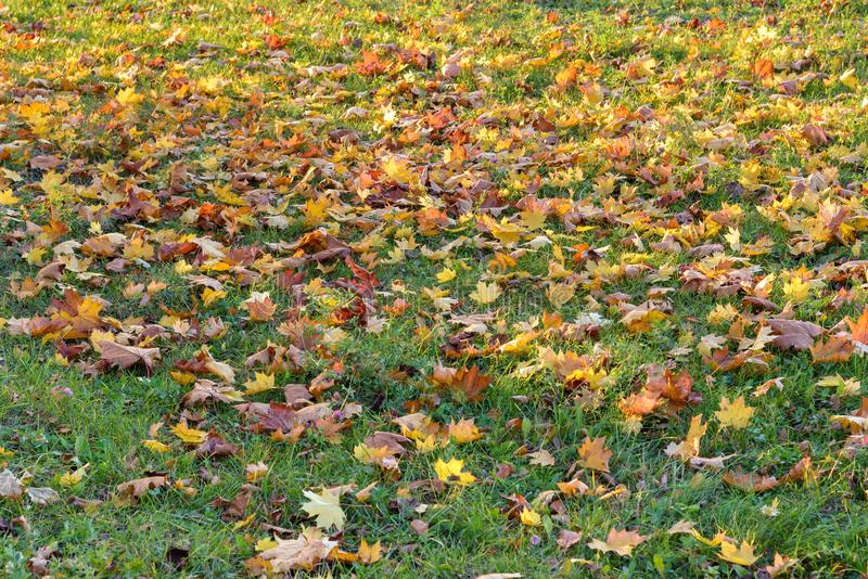 Autumn leaves on the grass as natural background royalty free stock photography