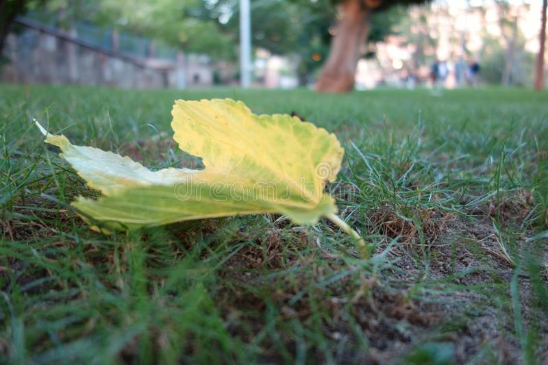 Leaves in the grass royalty free stock image