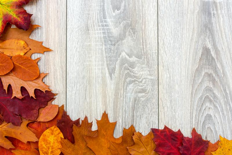 Autumn Leaves On Gray Wooden Background - Seasonal Autumn Concept royalty free stock photos