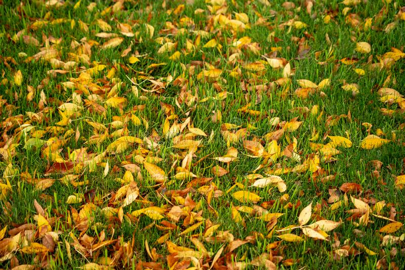 Autumn leaves on green grass. Rainy day in Northwestern Pennsylvania stock images