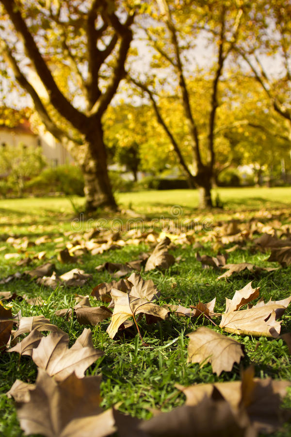 Download Autumn Leaves On Green Lawn With Trees In Background Stock Image - Image of leaves, colour: 30748727