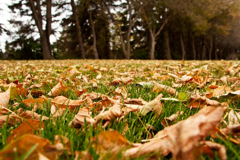 Download Autumn Leaves On The Ground Stock Photo - Image: 27052876