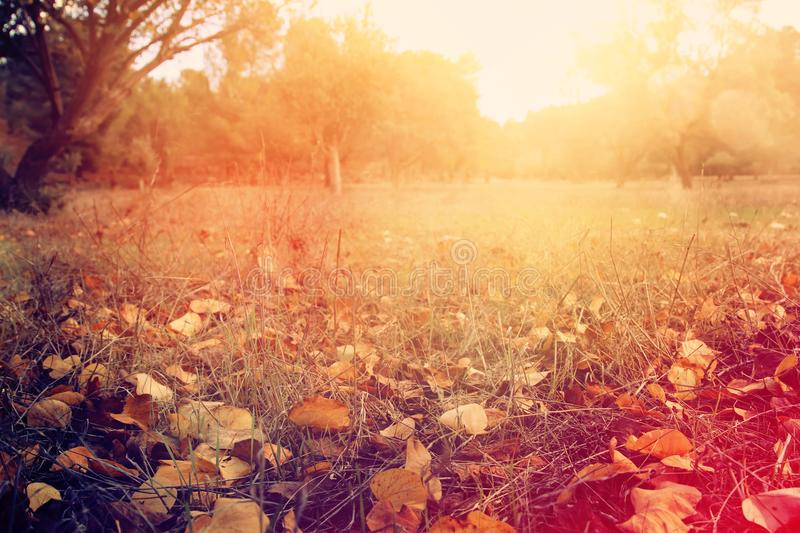 autumn leaves on the ground. fall wallpaper. toned image. stock photo
