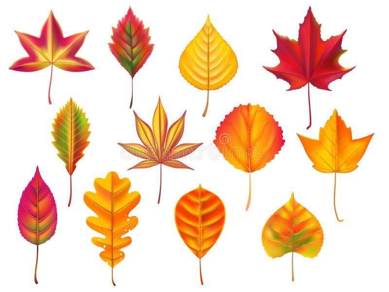 Autumn Leaves Het gevallen blad, droogt dalings bladdraagstoel en de dalende oktober-aardbladeren isoleerden vectorreeks royalty-vrije illustratie