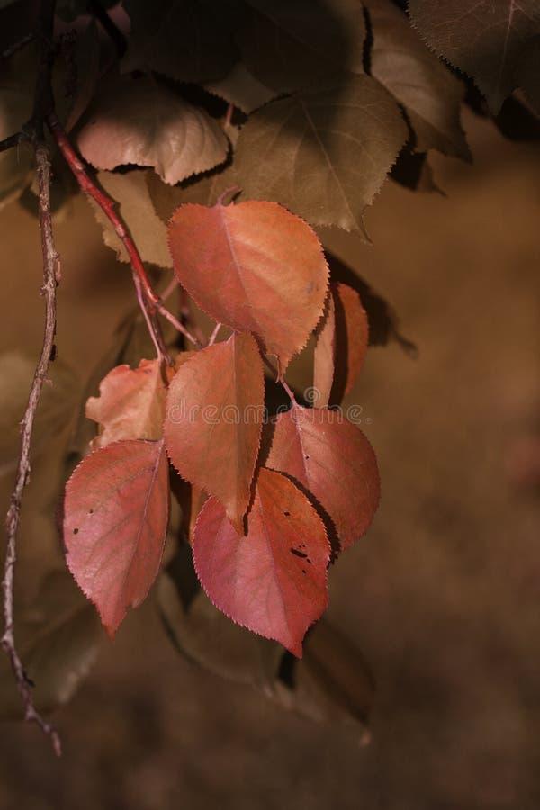Autumn Leaves Hojas del amarillo del otoño en ramas fotos de archivo libres de regalías