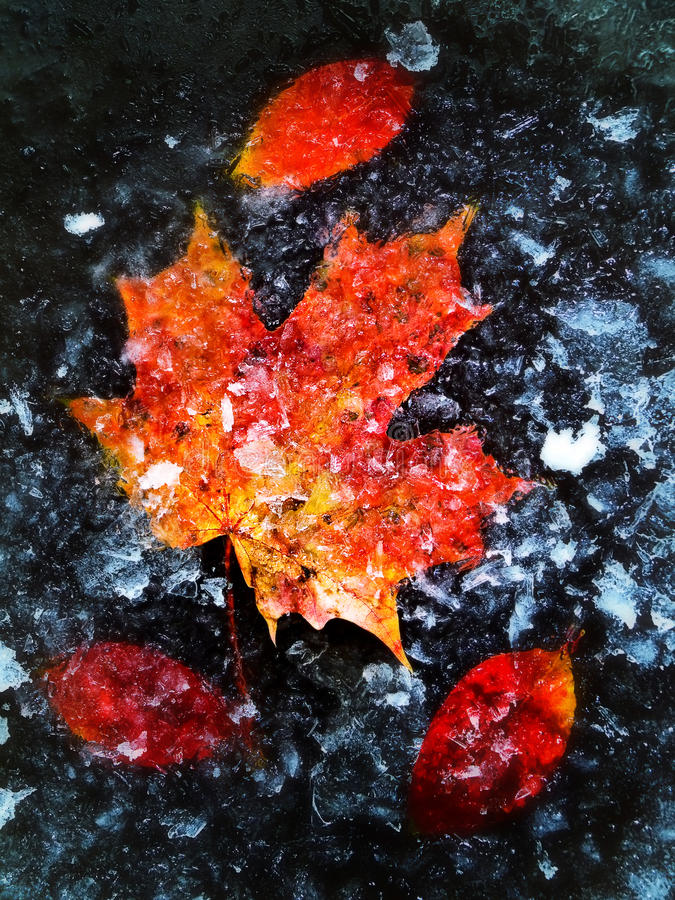 Download Autumn Leaves In Ice Stock Images - Image: 10926094