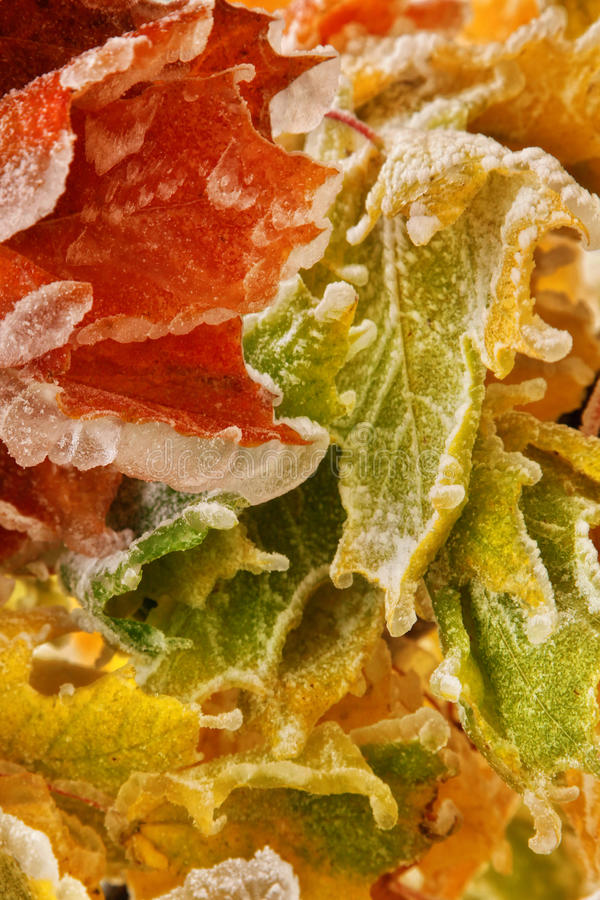 Download Autumn Leaves Royalty Free Stock Photography - Image: 34126507