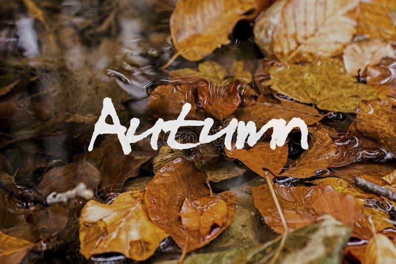 Autumn Leaves im Bach Autumn Concept Wallpaper stockbilder