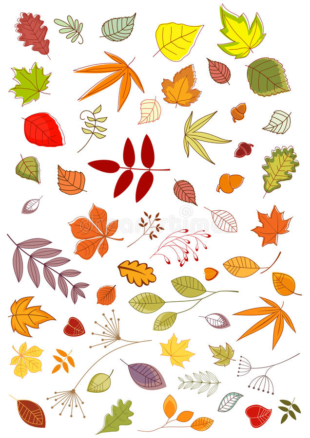 Autumn leaves and inflorescences royalty free illustration