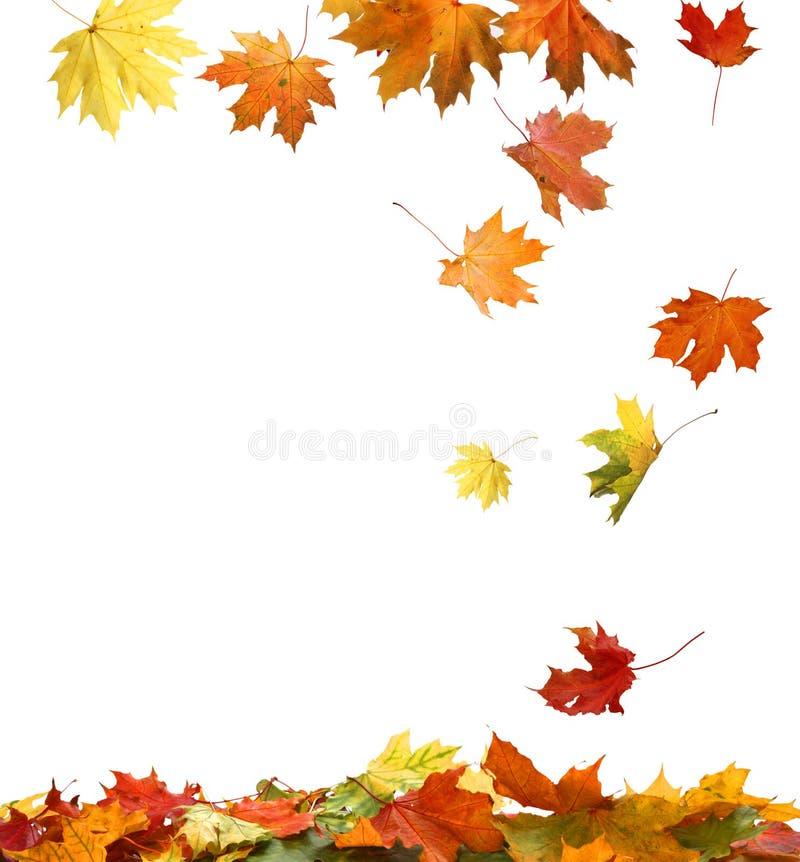 Autumn Leaves isolado imagem de stock
