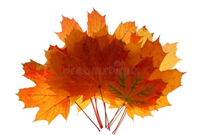 Autumn leaves isolated stock illustration