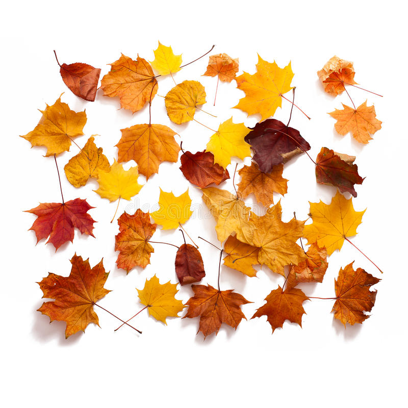 Autumn leaves isolated royalty free stock photos