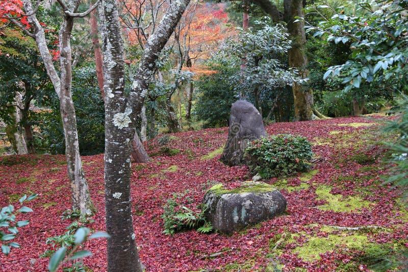 Autumn Leaves In Japan fotografering för bildbyråer