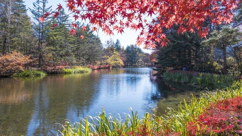 Autumn Leaves In Japan immagine stock libera da diritti