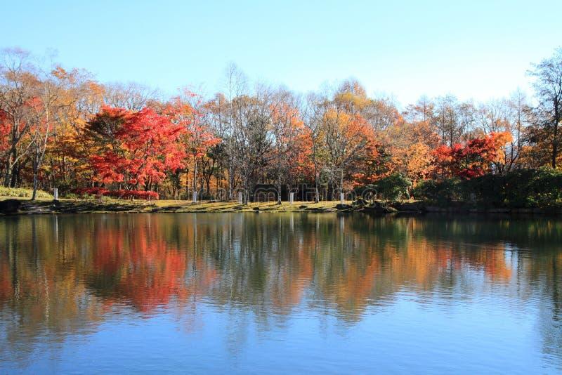 Autumn leaves by lake in Kiyosato highland royalty free stock photo