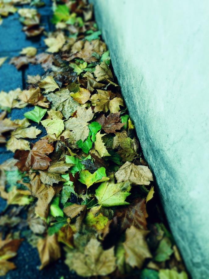 Autumn leaves left behind royalty free stock images