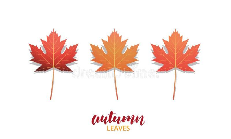 Autumn Leaves Les feuilles de chute conçoivent la collection pour l'annonce, la bannière, le fond etc. Feuilles de vecteur d'auto illustration libre de droits