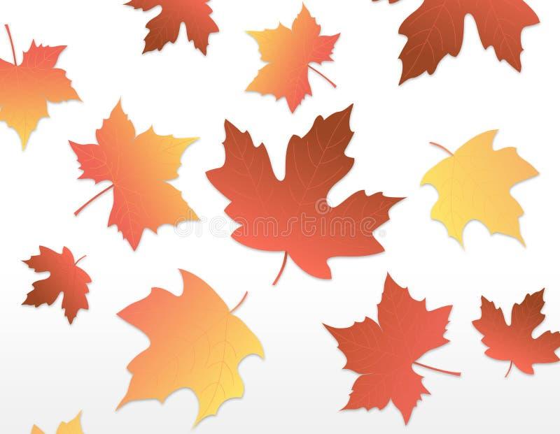 Autumn Leaves [maple] royalty free stock photo