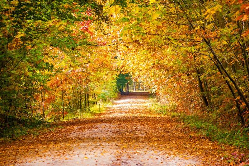 Autumn. Leaves at Mastbos Breda stock photo