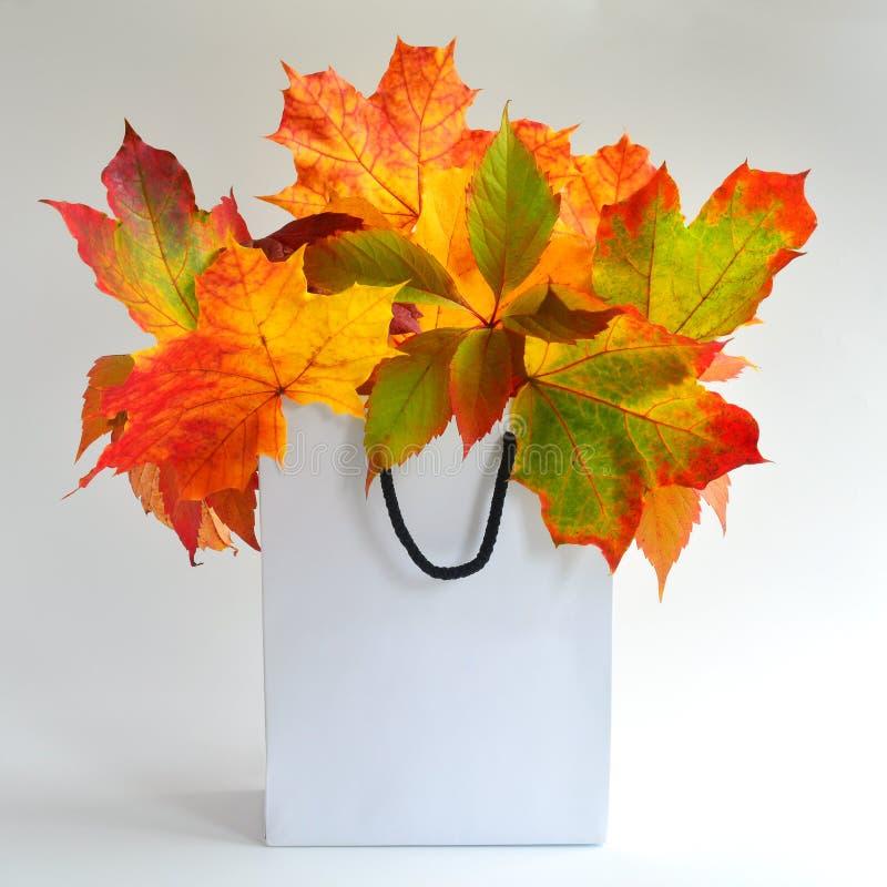 Autumn Leaves Mock Up foto de archivo libre de regalías
