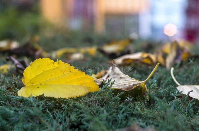 Autumn Leaves nas luzes da cidade da rua no crepúsculo imagens de stock royalty free