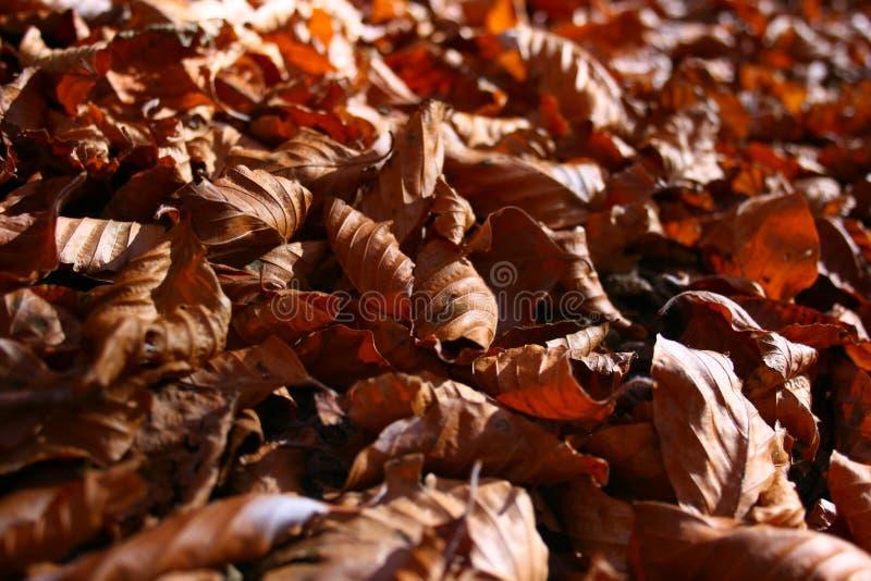 Autumn leaves natural carpet stock image