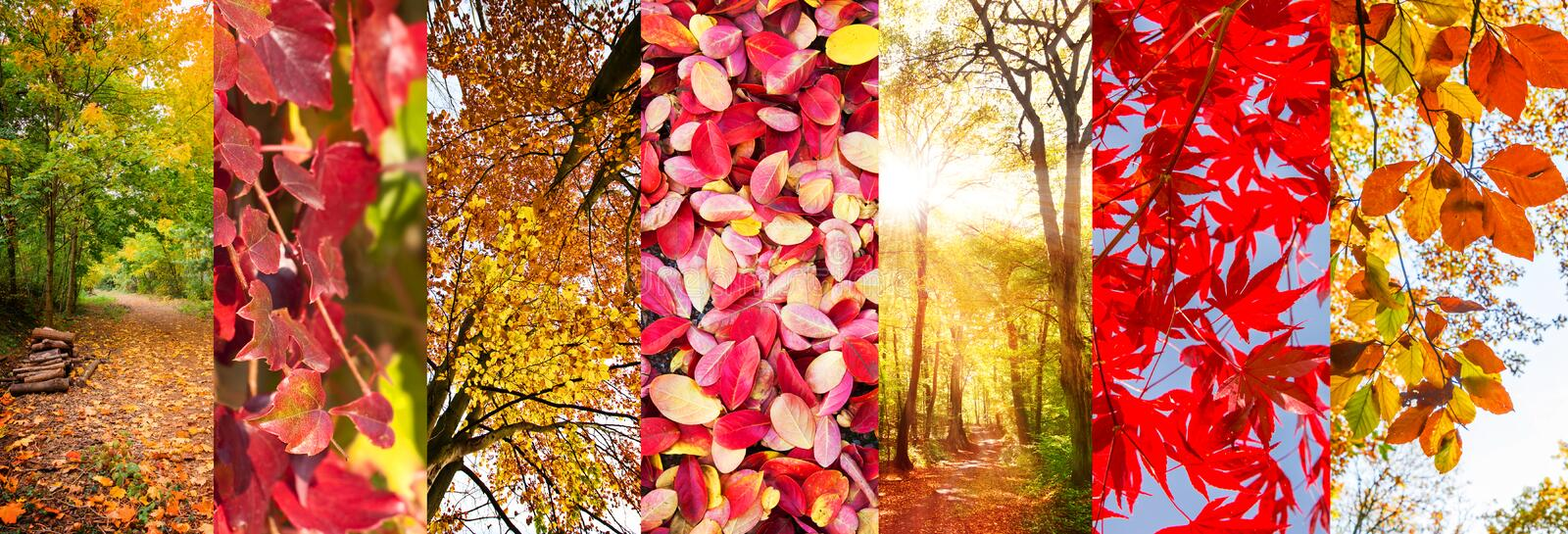Autumn leaves and nature landscapes panoramic collage royalty free stock photography