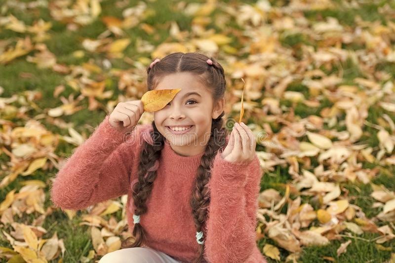 Autumn leaves and nature. Small child with autumn leaves. Happy childhood. School time. Happy little girl in autumn stock photos