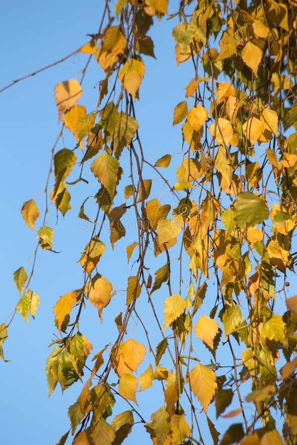 Autumn Leaves stockbild