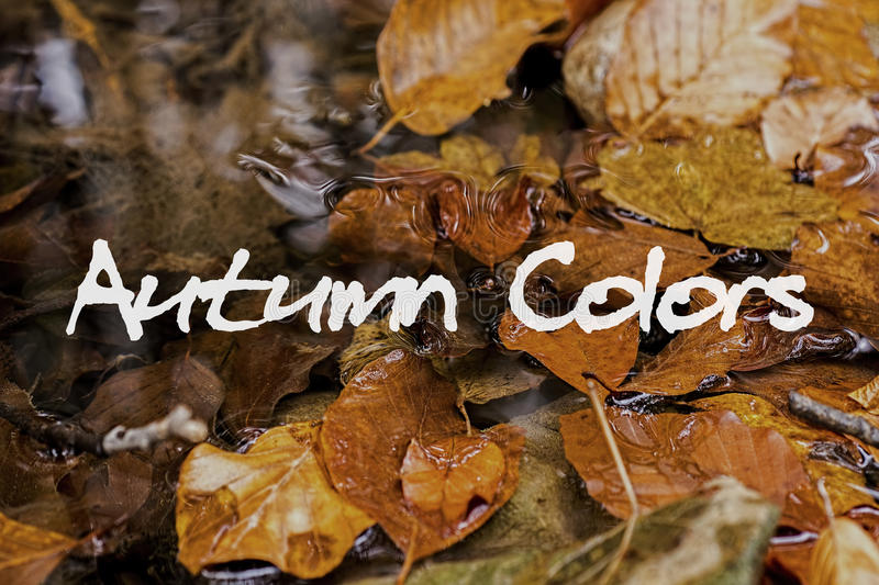 Autumn Leaves no ribeiro Autumn Colors Concept Wallpaper imagem de stock royalty free
