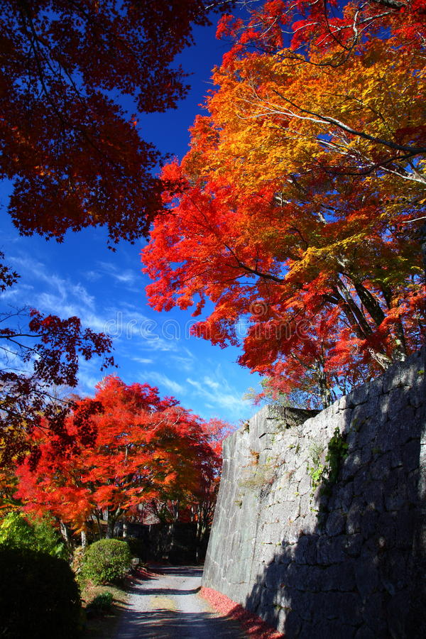 Autumn leaves of Oka Castle. It is the colored leaves of Oka Castle royalty free stock photo