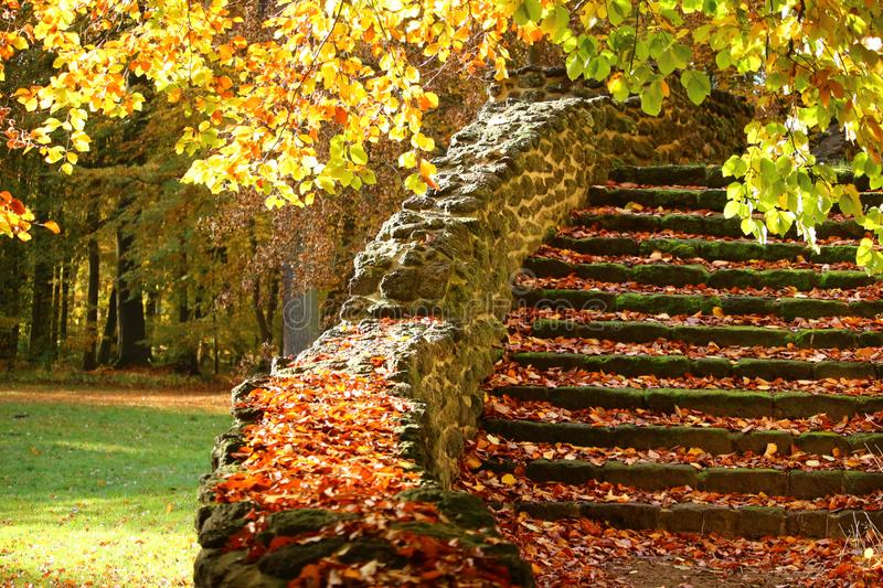 Autumn leaves on old stairs royalty free stock image