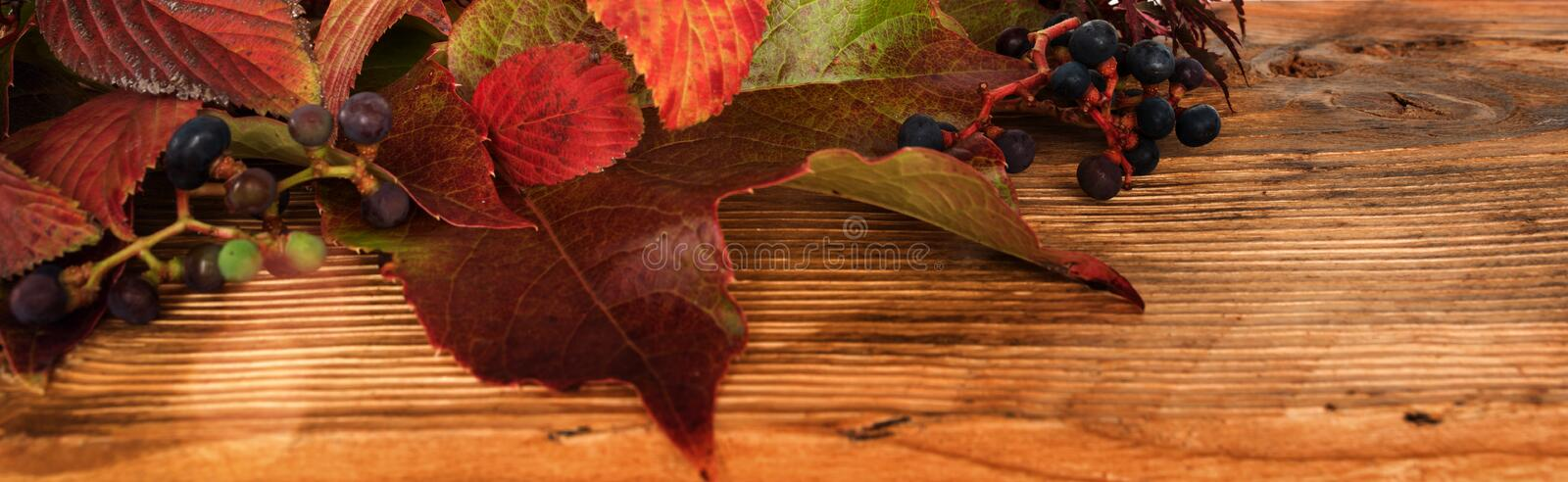 Autumn leaves on old wood royalty free stock image