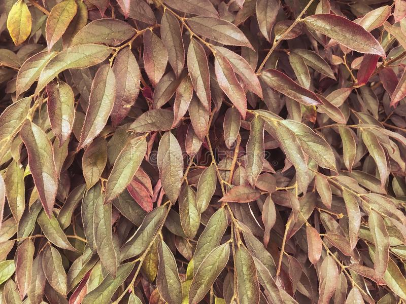 Autumn Leaves op Dichte Omhooggaand van het Takkenpatroon royalty-vrije stock foto's