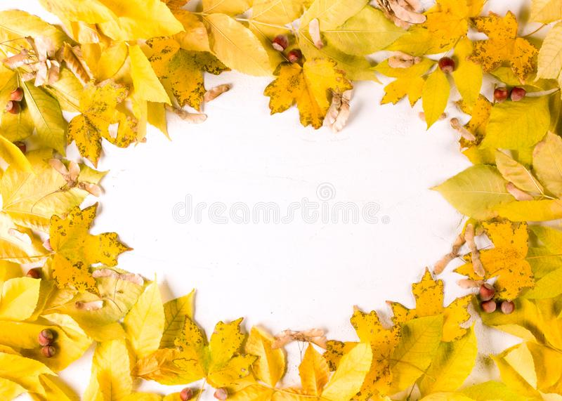 Autumn leaves oval frame border n white background, top view, copy space royalty free stock images