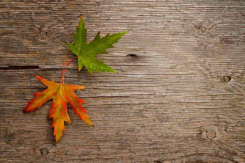 Download Autumn leaves stock image. Image of damaged, leaves, backdrop - 33673555
