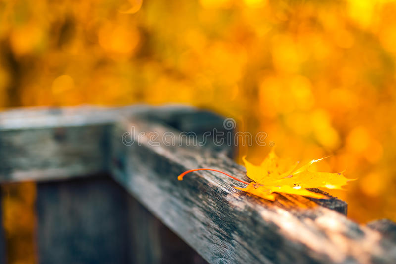 Autumn leaves over wooden fence background. Yellow, orange leaf in the autumn forest stock photography