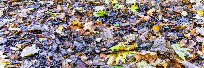 Autumn Leaves Panorama imagens de stock royalty free