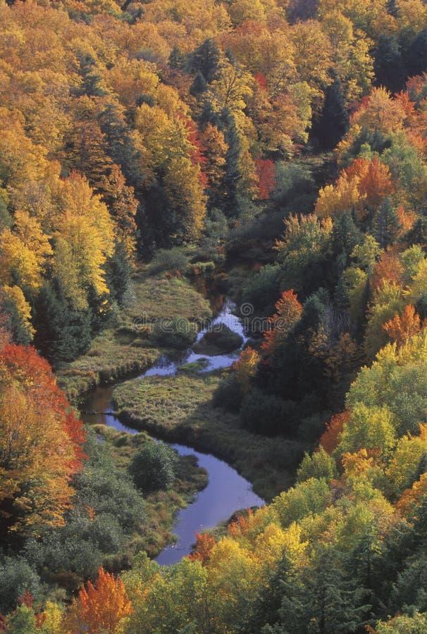 Autumn Leaves, parco di stato dell'istrice, Michigan immagine stock