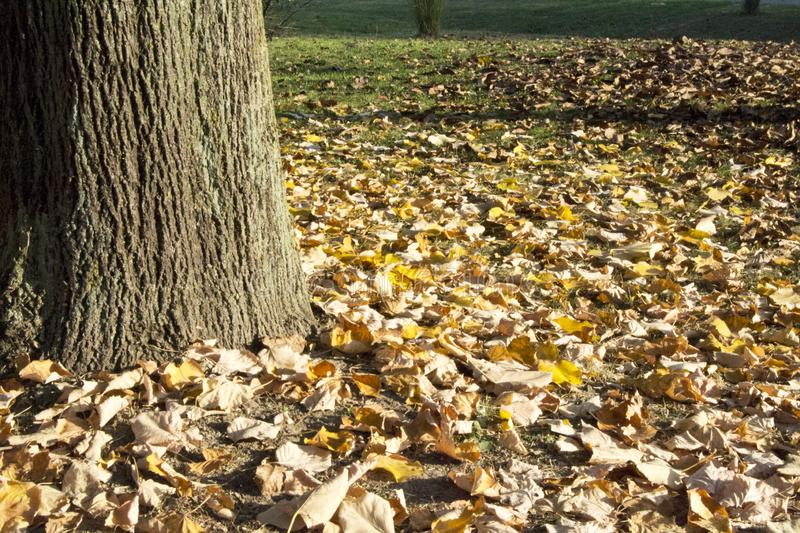 Autumn Leaves In The Park. stock photos