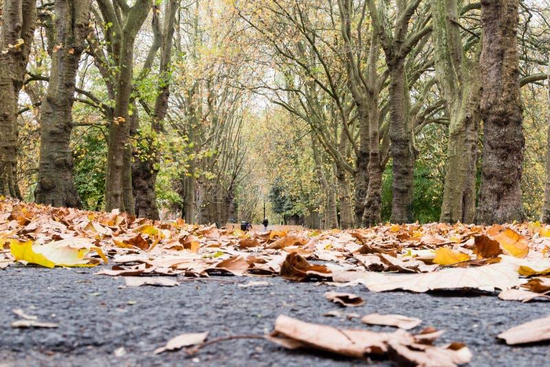 Autumn Leaves Pathway royaltyfria bilder