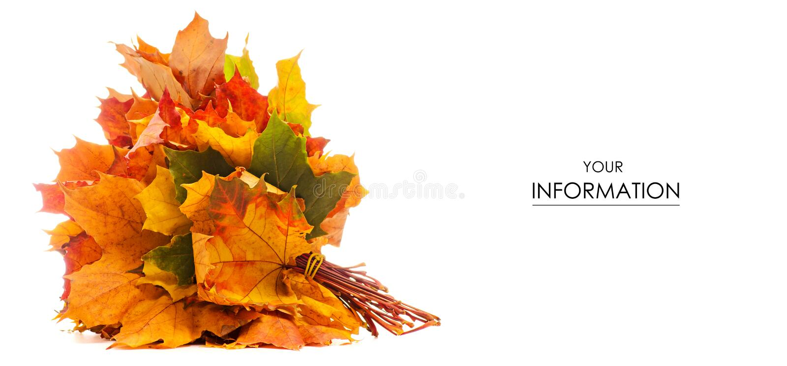 The autumn leaves pattern royalty free stock photography